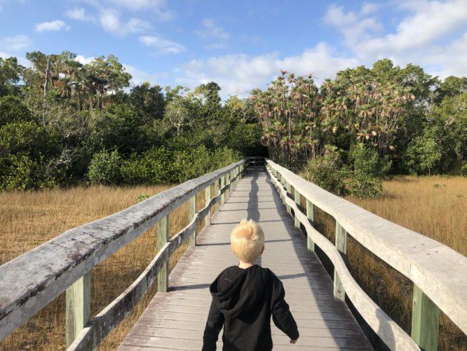 mahogany trail everglades national park